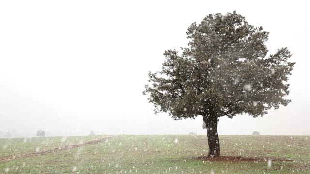 Oak Tree in Blizzard video