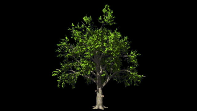 Oak tree in the wind seamless loop, Luma Mate attached