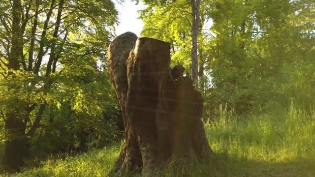Eiche Natur Hintergrund. Sonnenlicht und Bäume in einem Wald oder Park – Video