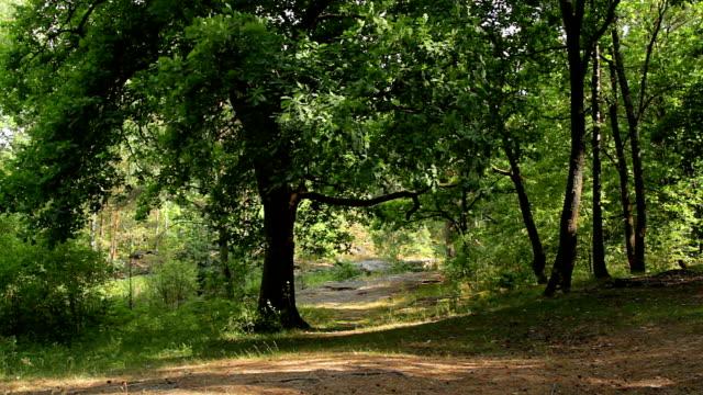 дуб на просека - дубовый лес стоковые видео и кадры b-roll