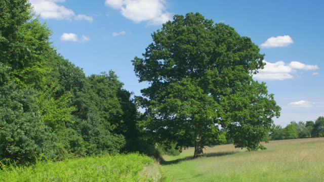 oak tree through the four seasons timelapse. - spring stock videos & royalty-free footage