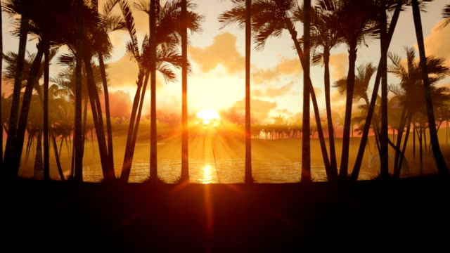 Oasis in desert with water pond and palm trees at sunset, zoom out Oasis in desert with water pond and palm trees at sunset, zoom out desert oasis stock videos & royalty-free footage