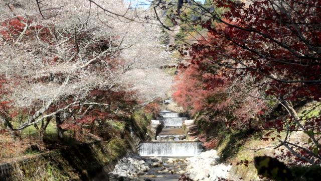 小原式桜の咲き(小原式桜四季桜) : 愛知県豊田市 - トヨタ点の映像素材/bロール