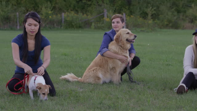 Obedience Training video