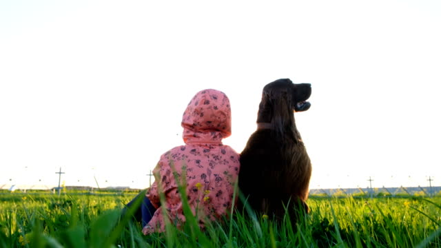 Obedient dog sits still on the grass with the owner of the woman at sunset in the summer. Irish Setter is the best friend Obedient dog sits still on the grass with the owner of the woman at sunset in the summer. Irish Setter is the best friend. irish setter stock videos & royalty-free footage