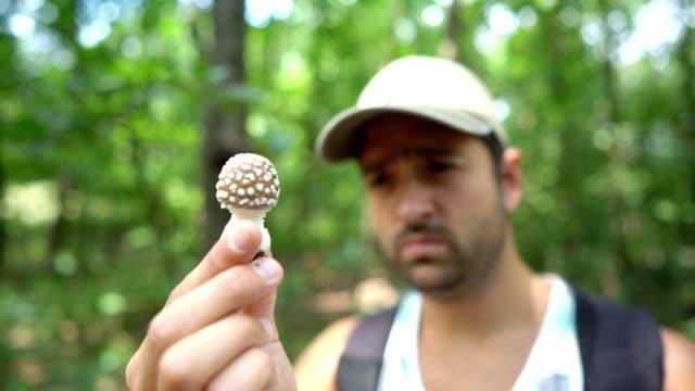 Observing poisonous mushroom