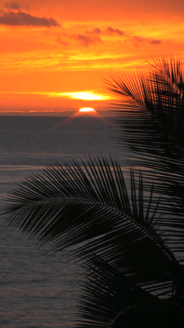 ocean and palm sunset vertical hd - vertical format video stock videos and b-roll footage