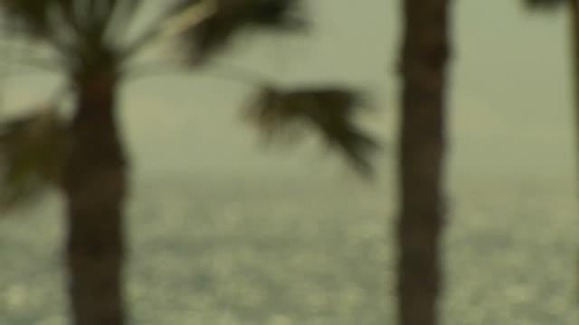 ocean and palm tree - intoning bildbanksvideor och videomaterial från bakom kulisserna