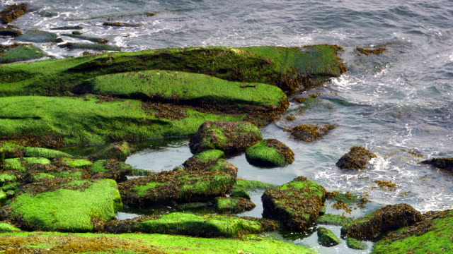 Ocean Sea Algae, Slow Motion Waves on Picturesque Rocks, Close Up Water video