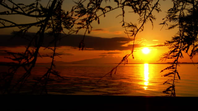 ocean sunset with tree and leaves silhouette - parte della pianta video stock e b–roll