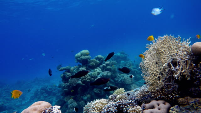 Ocean. Underwater life in the ocean. Colorful corals and fish. Life in the ocean. Tropical fish and coral reefs. Beautiful corals. coral cnidarian stock videos & royalty-free footage