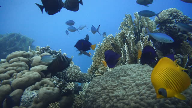Ocean. Underwater life in the ocean. Colorful corals and fish. video