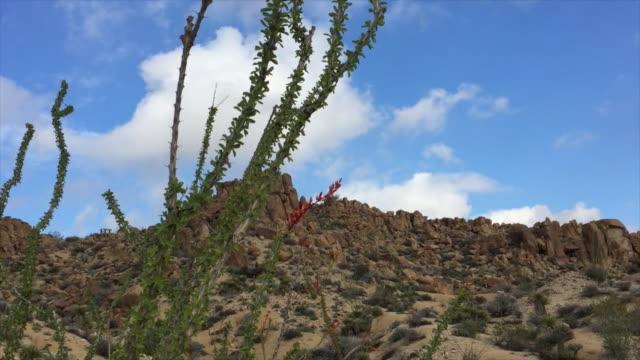 オコティージョ サボテン ジョシュア ツリー国立公園 - オコティロサボテン点の映像素材/bロール