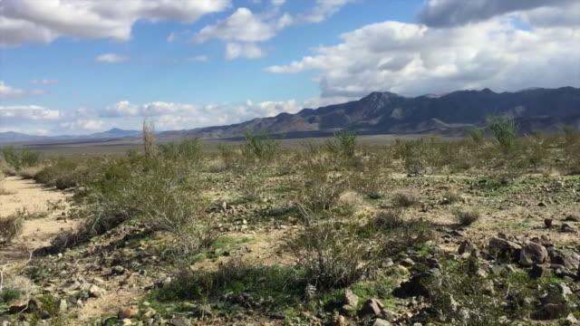 ocotillos ジョシュア ツリー国立公園 - オコティロサボテン点の映像素材/bロール