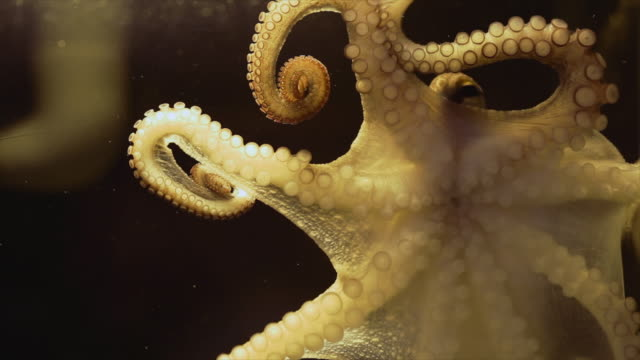 octopus in the dark - octopus stock videos & royalty-free footage