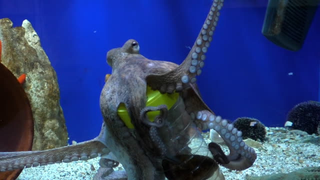 octopus takes food from bottle - octopus stock videos & royalty-free footage