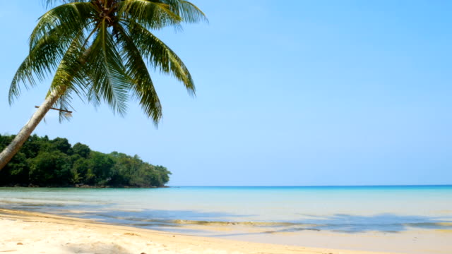 4K of landscape of tropical sea with coconut palm tree leaf blow in the wind, white sand beach and crystal clear ocean water and blue sky background during the summer season with sound of wave