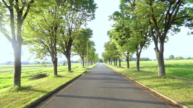 p.o.v. of walking straight path to success. straight road between green trees. - пешеходная дорожка путь сообщения стоковые видео и кадры b-roll