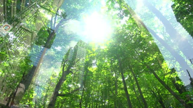 緑の森のあるオフィスビル - 緑 ビル点の映像素材/bロール