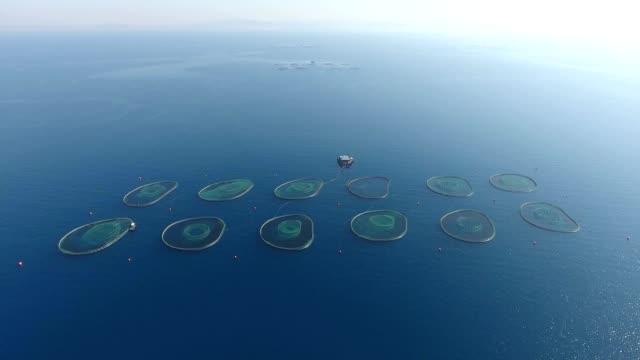 Offshore Aquaculture Fish Farms 4096x2160 video