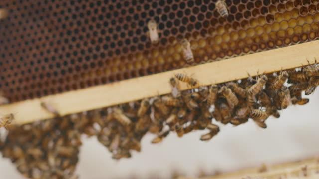 oh alveare te stesso per favore! - apicoltura video stock e b–roll