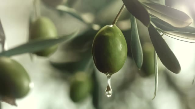 oil dripping from an olive - oliva video stock e b–roll