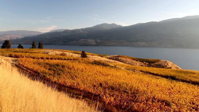 Okanagan Valley Autumn Vineyard Kaleden video