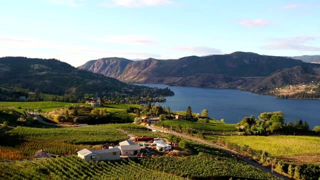 vídeos de stock, filmes e b-roll de okanagan valley vineyard winery orgânico - região thompson okanagan colúmbia britânica