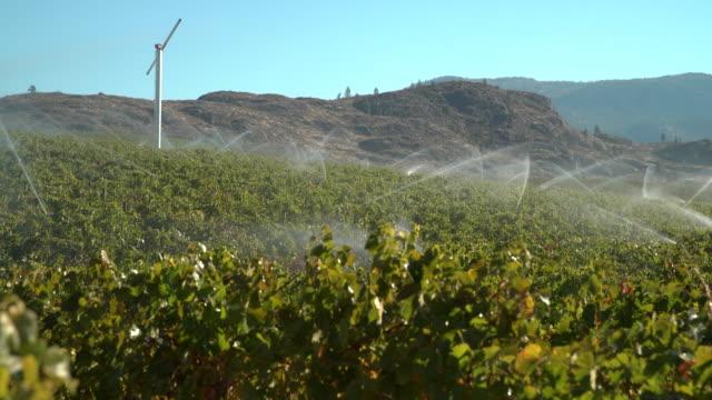vídeos de stock, filmes e b-roll de irrigação da vinha okanagan bc, 4k uhd - região thompson okanagan colúmbia britânica