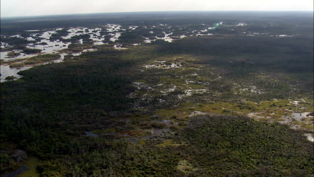 okefenokee national park - Aerial View - Georgia,  Ware County,  United States video