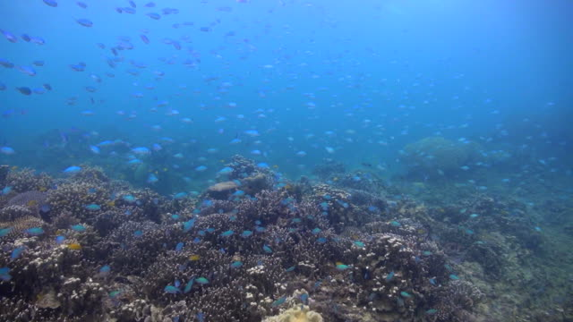 Okinawa Islands Underwater video