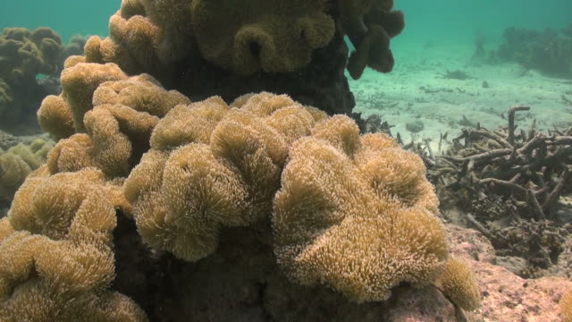 Okinawa Islands Underwater underwater life sea life stock videos & royalty-free footage
