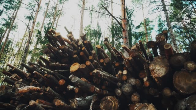 old and rotten logs lie on the edge of the forest. the concept of cleaning the forest from rotting trees and dead wood, trees spoiled by beetle caroids - inserviente medico video stock e b–roll