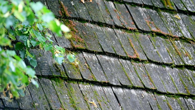 old and weathered wooden roof tiles - moss stock videos & royalty-free footage