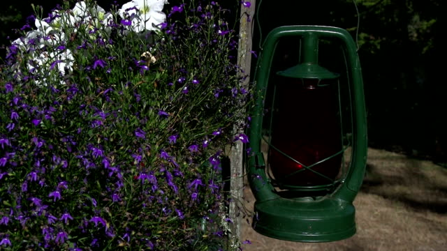 Old antique green lantern swinging in the wind with flowers video