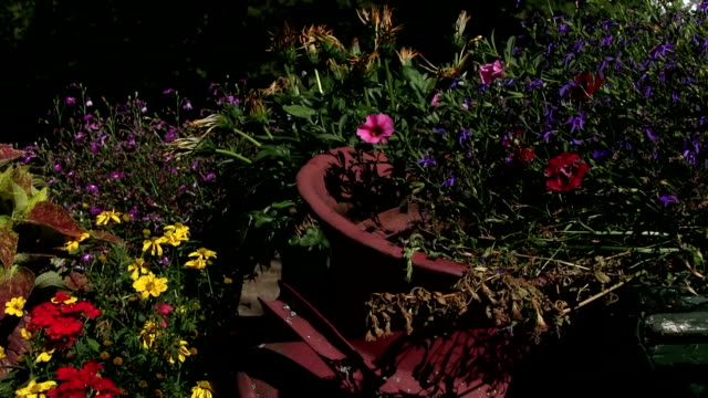 Old antique horse drawn wagon full of flowers pan video