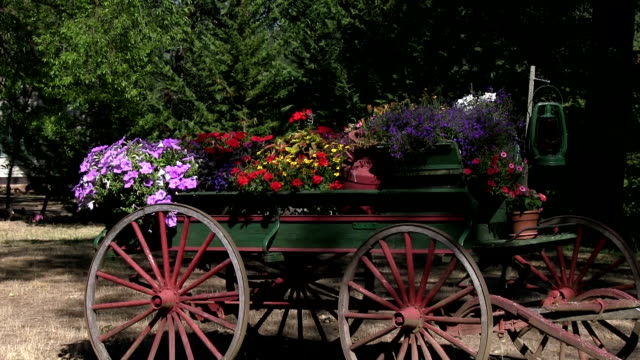 Old antique horse drawn wagon full of flowers zoom in video
