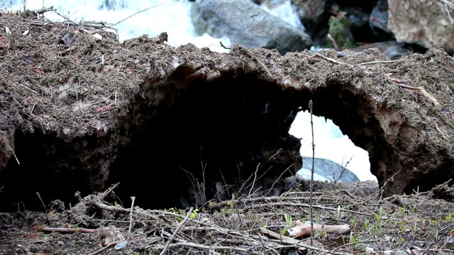 Old avalanche melting in spring valley Avalanche in springtime, in a Pyrenees valley. Dirty snow, broken trees, and giant rocks moved by the strength of the snow.  lleida stock videos & royalty-free footage