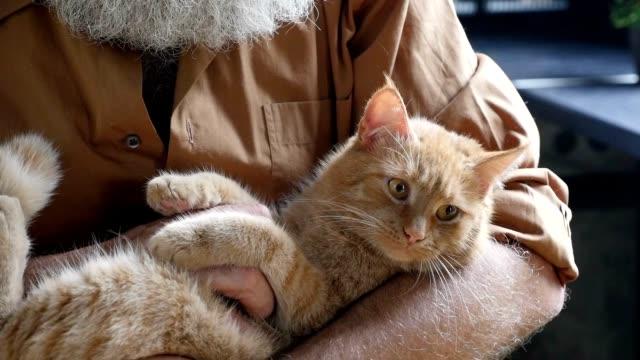 skäggiga gubben strök en katt i köket - katt inomhus bildbanksvideor och videomaterial från bakom kulisserna
