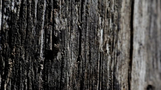 Old black wooden texture background Old black wooden texture background. wood texture stock videos & royalty-free footage