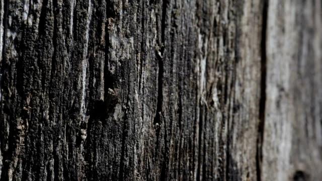 vidéos et rushes de vieux fond de texture en bois noir - bois texture