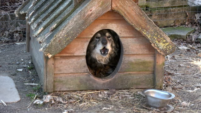 Old dog in old doghouse in farm video