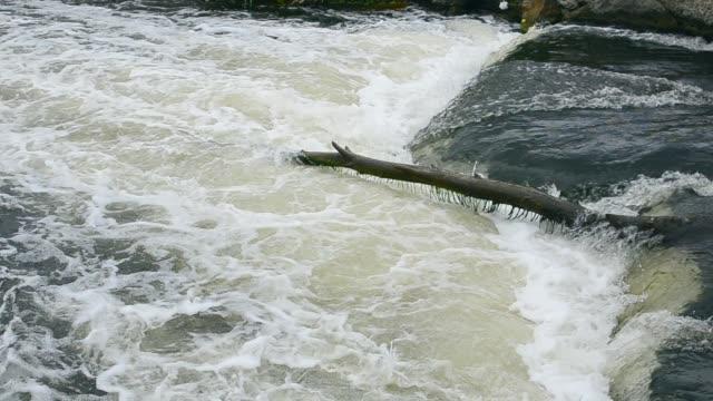 在一大流水中的老倒下的樹。 - 亞洲中部 個影片檔及 b 捲影像
