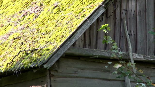 Old farm barn with mossy roof video