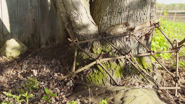 Old harrow taken in a tree trunk / Field background