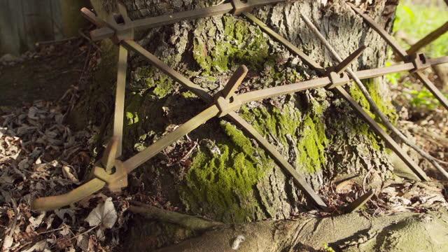 Old harrow taken in a tree trunk