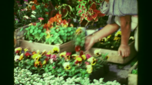 1978: Old hispanic woman picking out flower plants at gardener's market.