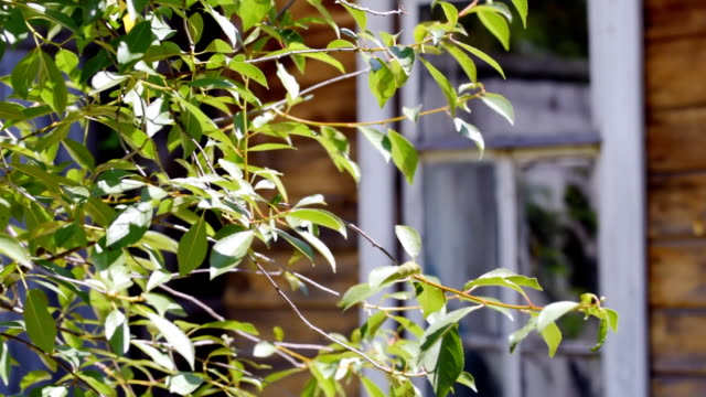 old house windows - colore ciliegia video stock e b–roll