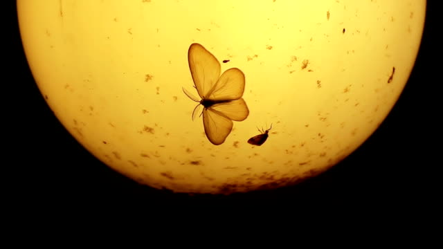 Old lamp, moths and small insects at night video