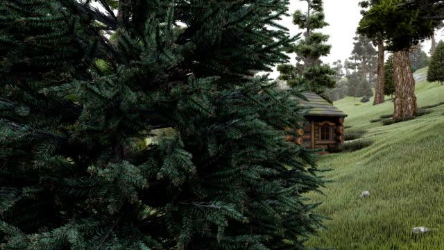 alten blockhütte im nadelwald - blockhütte stock-videos und b-roll-filmmaterial